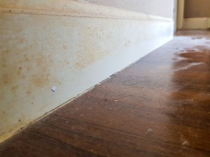 Odstraňování plísní a řas ze zateplené fasády